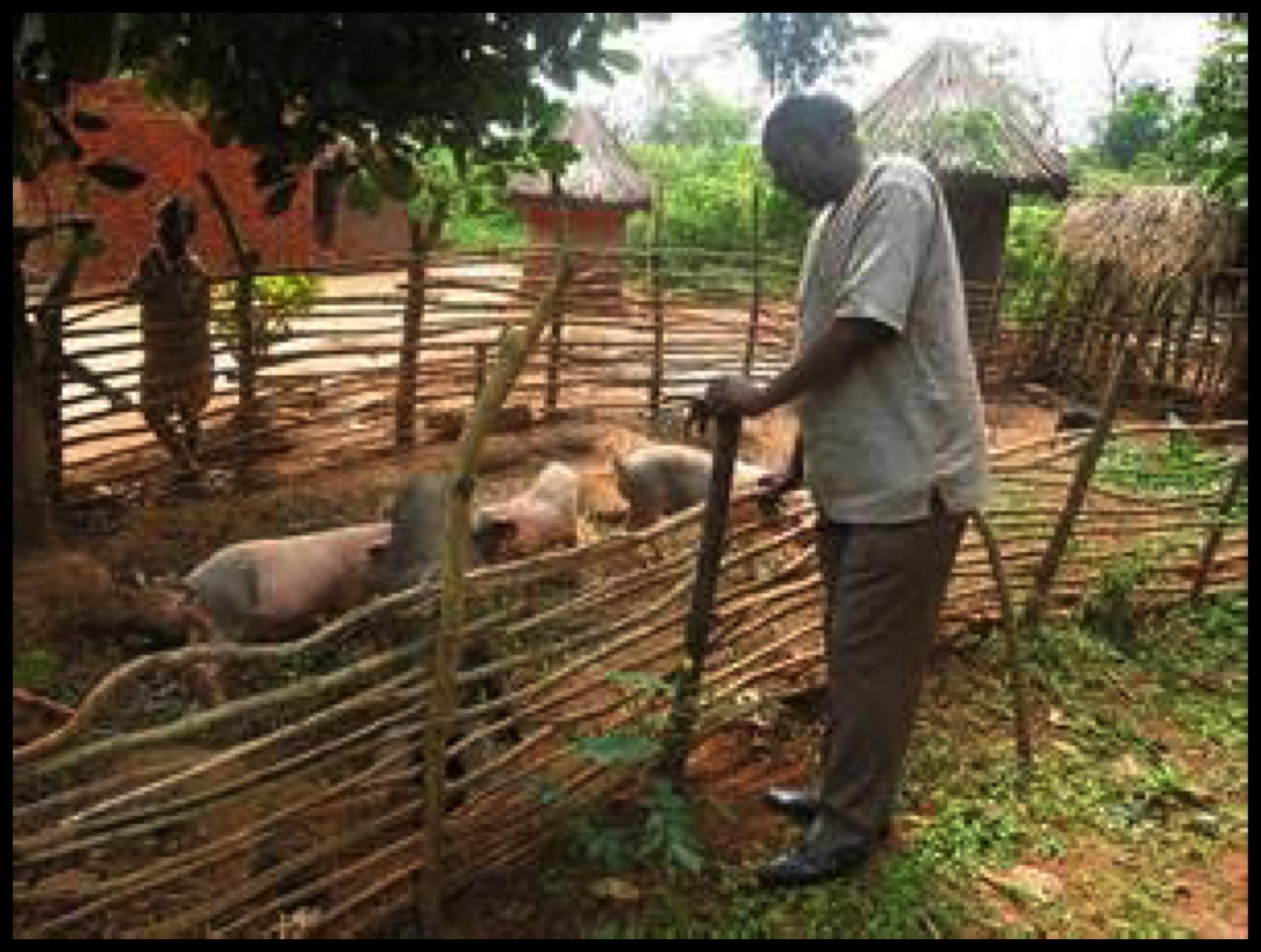 RwandaPiggery